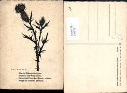 536935,Scherenschnitt Silhouette Elfe Stäbler Distel Pflanze - Scherenschnitt - Silhouette