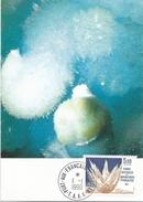 TAAF 1990 Port Aux Francais Mineral Aragonite Maxicard - Mineralen