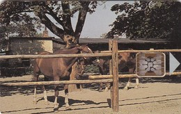 Czechoslovakia, CS-CSF-PUB-0018, Psychiatric Sanatorium - Bohnice, Horses,2 Scans.    Chip : SC5  SB - Czechoslovakia