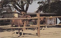 Czechoslovakia, CS-CSF-PUB-0018, Psychiatric Sanatorium - Bohnice, Horses,2 Scans.    Chip : SC5  SB