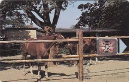 Czechoslovakia, CS-CSF-PUB-0018, Psychiatric Sanatorium - Bohnice, Horses,2 Scans.    Chip : SC4  SB