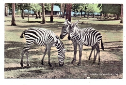 SUDAN - KHARTOUM, Zoo, Zebras - Soudan