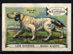 Meurisse - Ca 1930 - 67 - Les Chiens, Dogs - 4 - Setter Anglais, English Setter - Sonstige