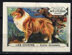 Meurisse - Ca 1930 - 67 - Les Chiens, Dogs - 11 - Collis écossais, Collie - Chocolate