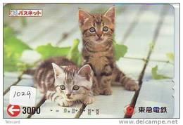 TC Japon CHAT (1029) Cat KATZE Poes KAT Gato GATTO Japan - Katten