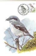 MC BUZIN / Pie - Grièche Grise / Klapekster / Lanius Excubitor / Great Grey Shrike / Raubwürger  1998 - Songbirds & Tree Dwellers