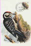 MC BUZIN / Pic épeichette   / Kleine Bonte Specht  / Dendrocopos Minor / Lesser Spotted Woodpecker  / Kleinspecht   1990 - Specht- & Bartvögel