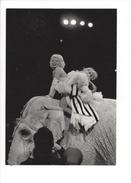 16378 - Marilyn Monroe Circus New York 1951 Eléphant  Photograph By Erika Stone Fotofolio - Acteurs