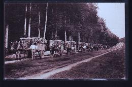 TURLURE TRANSPORT BOIS CHAUFFAGE - France