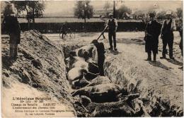 HEROIQUE BELGIQUE CHAMP DE BATAILLE HAELEU ENTERREMENT DES CHEVAUX TUES,BEAU PLAN REF 51244 - Guerre 1914-18