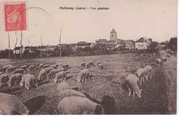 45- 50576 +  MELLEROY   -  Vue Générale ,les Moutons - Frankrijk