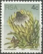 SUDAFRICA - AFRICA DEL SUR 1977 Flora - Protesta Plants. USADO - USED. - África Del Sur (1961-...)