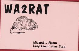 Rat Rodent Muis Mouse USA United States New York Long Island Oakdale QSL Card Amateur Radio Funkkarte 1988 ? USA - Radio Amateur