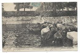 CPA - DRAVEIL, VACHES A L' ABREUVOIR - Essonne 91 - Animée, Bovins - Circulé 1905 - Vaches