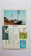 Afrique Du Sud - Plettenberg Bay - Timbre - Vignette - Afrique Du Sud