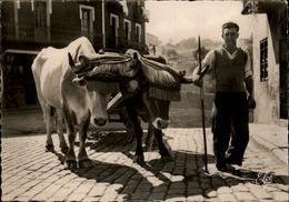 64 - Folklore Basque - Attelage Basque - France