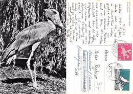Kt. Basel - Zoologischer Garten Basel - Schuschnabel (A-L 553) - Postcards