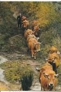 Carte Postale RETOUR QUOTIDIEN - Vaches