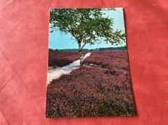 Nederland Pays-Bas Boom Arbre - Bomen