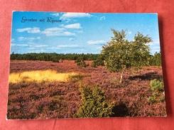 Nederland Boom . Groeten Uit Rijssen 1975 - Bomen