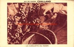 Jus De Raisin CHALLAND - La Cueillette Du Raisin - Vignes