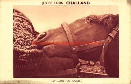 Jus De Raisin CHALLAND - La Cure De Raisin - Vignes