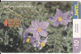 URUGUAY - Flower, Solanum Sisymbryfolium(217a), 01/02, Used