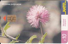URUGUAY - Flower, Mimosa Polycarpa(168a), 03/01, Used