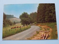 MANDERFELD Frankental ( ) Anno 1981 ( Zie Foto Voor Details ) !! - Büllingen