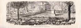 1872 - Gravure Sur Bois - Paris (6ème) - Les Mouton Au Jardin Du Luxembourg - Siège De Paris - FRANCO DE PORT - Estampes & Gravures