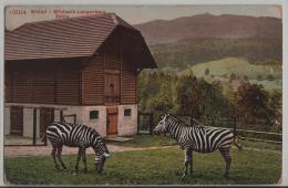 Sihltal - Wildpark Langenberg - Animee Zebra - ZH Zurich