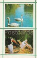 Swan - Pelican - Kiev Kyiv Zoo - 1976 - Ukraine USSR - Unused - Oiseaux