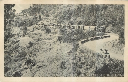 RARE SONADA FOREST DARJEELING - Inde