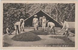 TRINIDAD - DRYING COCOA BEANS - Trinidad