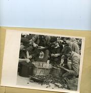 La France Sous Le Régime De Vichy . Les Jeunes Ramassent Les Chataignes Dans Les Centres De Jeunesse - Guerre, Militaire