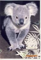 The KOALA BEAR ( Phascolarctos Cinereus ) Is Found From Northern Queensland Trough To Eastern South Australia - Australia