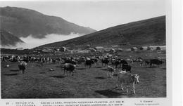 Andorre.. Pas De La Casa Frontière Franco-Andorrane Vaches Troupeau De Vaches Bovins - Andorre