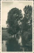 AK Trebur, Winkel Am Rhein, O 1955, Grünliche Rückseite Nur Im Scan (5314) - Duitsland