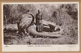 Sudan   BAHR-EL-GHAZAL Elephant Hunting  RP  Su350 - Sudan