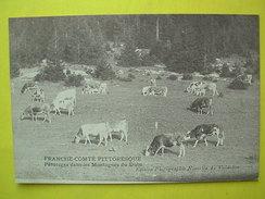 Valdahon ,paturages Et Vaches - France