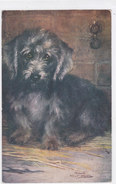 """CARD CANE DANDY DINMONT TERRIER  TUCK'S  """"OILETTE"""" PET DOGS SERIES II N°9889  -FP-V-2-  0882 -27034 - Chiens"""