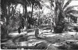 BISKRA - ALGERIE - Palmiers Dattiers Dans L'Oasis - VAN - - Biskra