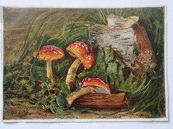 "OLD USSR Postcard  - ""Amanita"" By Yakovlev-   Champignon  - Mushroom - Old Russian Puzzle 1958 - Champignons"