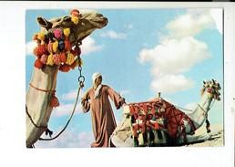 39158 Egypte - Chameaux - Camels - Kamelen - Egypte
