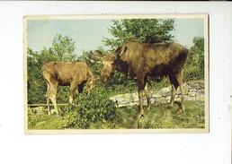 39159 Dieren - Animals