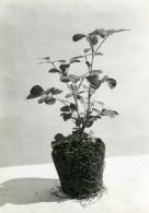 Etude Photographique Culture Du Riz Et Mais Lot De 10 Photos Anciennes Sadi-Photo 1910 - Photographs