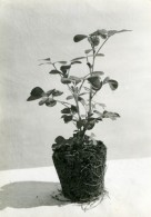 Etude Photographique Culture Du Riz Et Mais Lot De 10 Photos Anciennes Sadi-Photo 1910