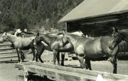 USA Texas Gary Le Petit Cowboy Chevaux Photo Dominique Darbois 1960'