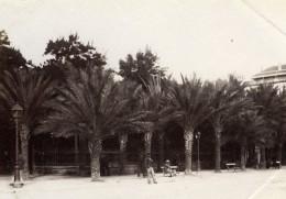 Algerie Alger Jardin Palmiers Ancienne Photo 1880'