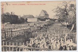 Les Oies D'Etival - En Charnie  Parc D'Engraissement. - France
